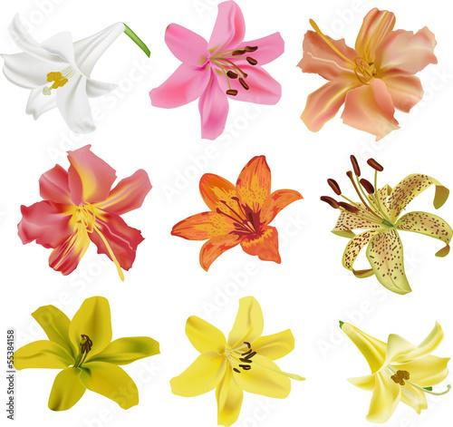 dziewiec-kolekcji-kwiaty-na-bialym-tle-lilia