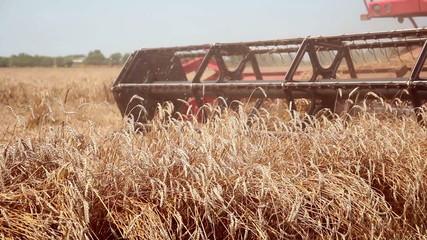Combine Harvester in Action