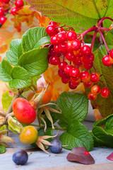 Wunderschöne Beeren und Früchte im Herbst