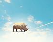 Rhino walking on rope