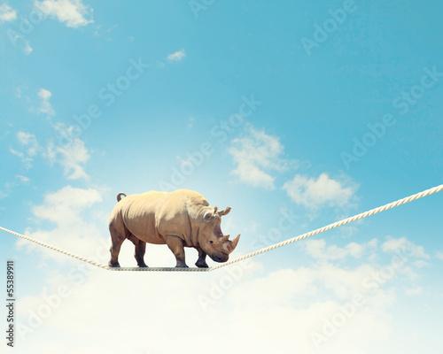 Tuinposter Neushoorn Rhino walking on rope