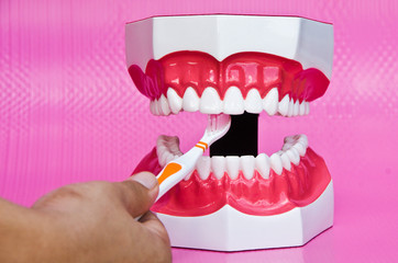 Showing how to brush teeth on a model on pink background