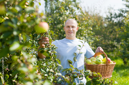 Handsome guy with basket of harvested apples