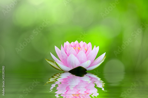 water lily , lotus on water with reflections