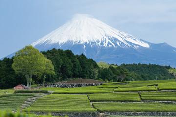 Mt. Fuji and Japanese green tea field