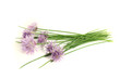 Schnittlauch mit Blatt und Blüte