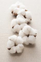 布の背景に複数の綿の実
