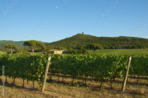 Italian farm whit vineyard and historical tower in italy, tuscan