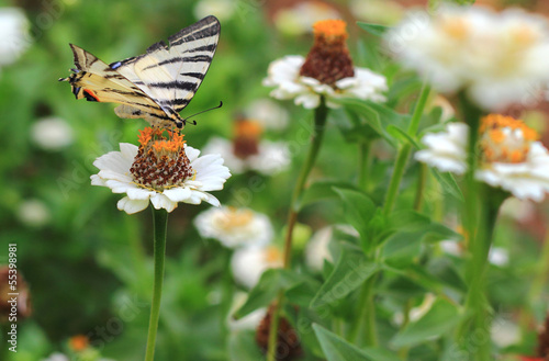 butterfly flying over flowers