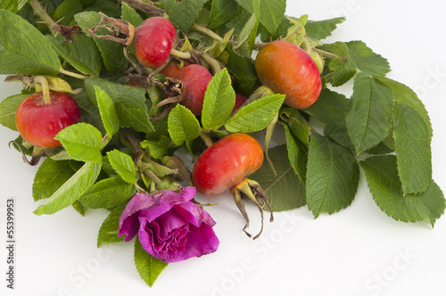 flower and rose hips