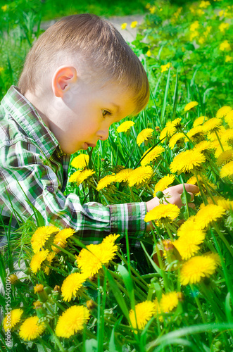 Beautiful little boy surrounded by dandelions chooses a flower