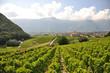Vineyards, Switzerland