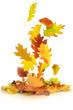 Herbst 62