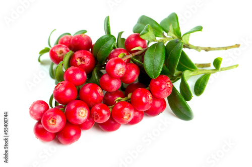 cowberries isolated on white background