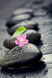 Pink flower and green leaf on spa stone on wet black surface, cl