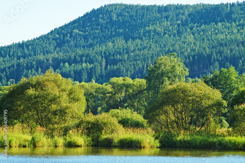 Trees and shrubs above the water