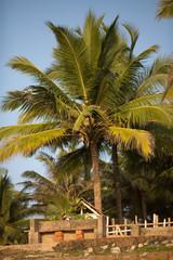 Tropical Paradise - Varkala
