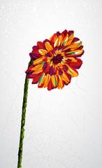 Geometric colorful flower transparency shape.
