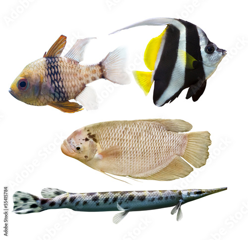 set of four fishes on white background