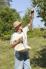 Happy gardener with straw hat picking organic apples
