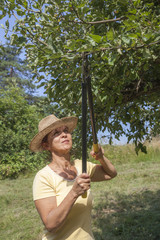 Woman gardener with straw hat cutting back tree branches