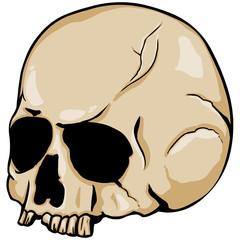 vector old stale skull