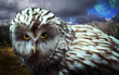 Scaring Owl