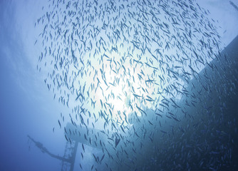 Shoal of fish in the sun