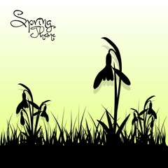 Spring grass background, First spring flowers, Snowdrops