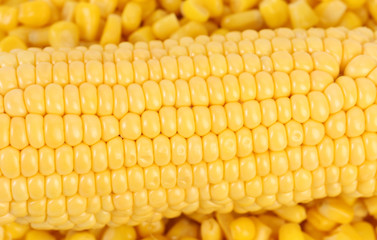 Corncob. Background of canned sweet corn.