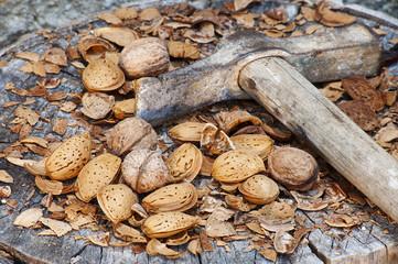 frutta secca noci martello stretto