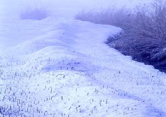 雪に積もった葦原