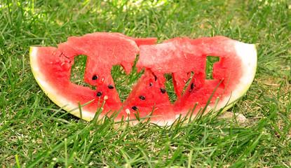 Fresh juicy watermelon slice