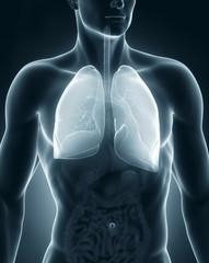 Man respiratory system anatomy anterior view