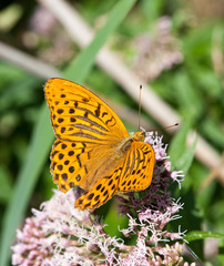 Butterfly on the flowers