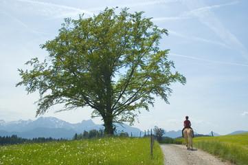 Reiterin vor Alpenkuslisse