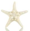 White starfish isolated on white