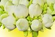 fresh lotus bud bouquet
