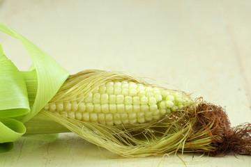 Junger Mais
