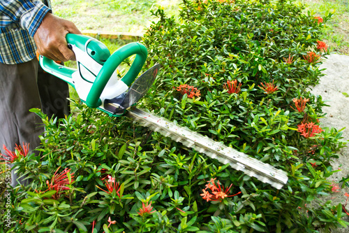Gardener cutting a bush