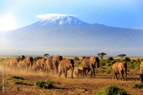 Poster Elefanten vor dem Kilimanjaro