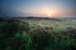 summer sunrise over swamp