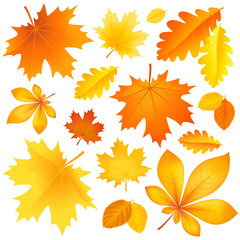 Set autumn leaves
