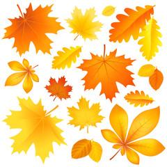 Set autumn leaves