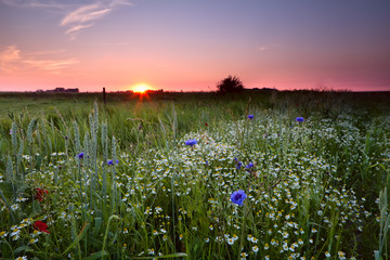 many wildflowers on field at sunset