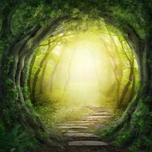 Route dans la forêt sombre