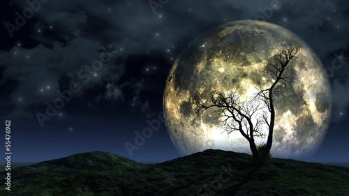 Drzewo na tle księżyca