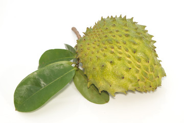 Soursop, Prickly Custard Apple fruit. (Annona muricata L.)