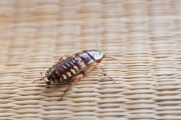 Roach on canvas mat.