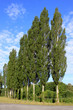 alignement d'arbres